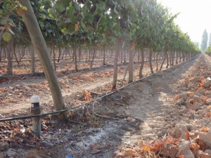 irrigation-goutte-a-goutte
